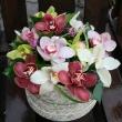 Norina Virág-Ajándék