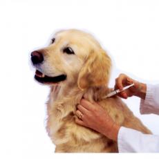 Blöki Doki Állatorvosi Rendelő