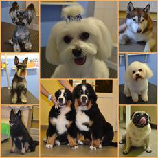 Kriszti Grooming Salon - Kutyakozmetika